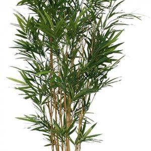 Bamboe kunstboom van Maxifleur