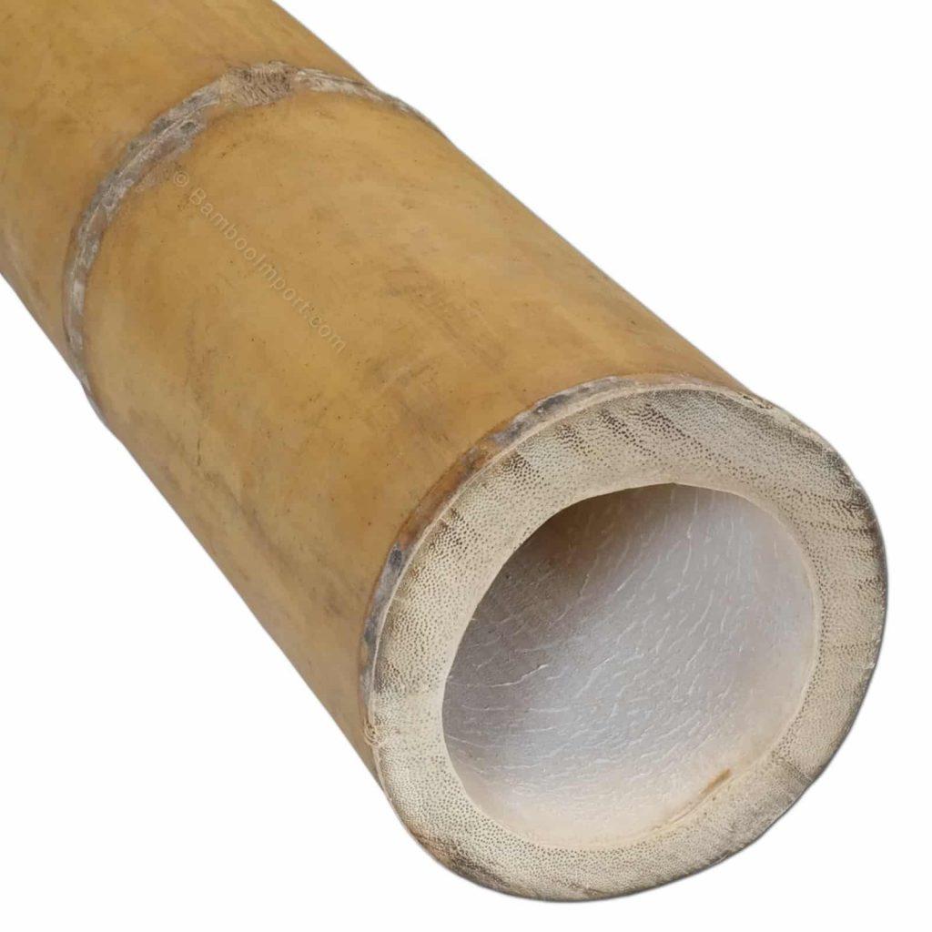 Guadua bamboe stokken van Bamboo Import